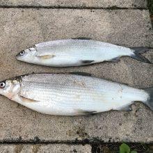 CDU im Kreis gegen Aquakulturen im See